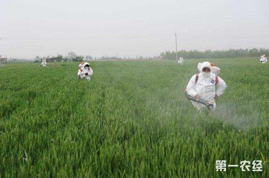农业农村部:小麦科学用药 实现减量增效