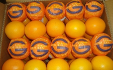 埃及政府将实行预防疾病传播方案以提供更为优质的橙子