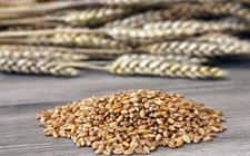 """农业发展观望:国产种子正在""""收复失地"""""""