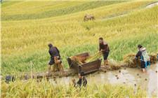 中科院谈:如何用农业文化遗产实现乡村振兴