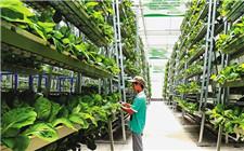 海南陵水:以科技助多产 垂直种植增产增收