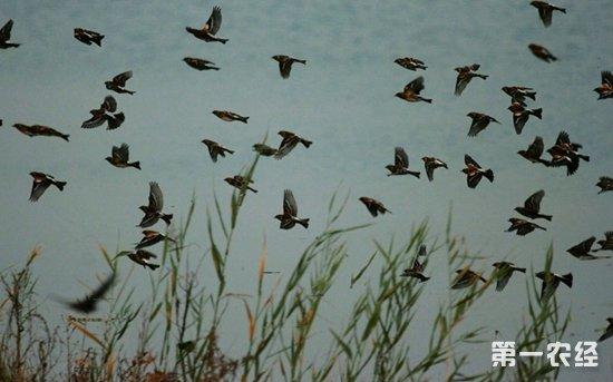 小燕子什么时候往南飞?燕子为什么往南飞?燕子往南飞到哪去?