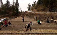 福建寿宁:小乡村对接大市场 以企带农促增收