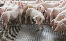 养殖户看过来了:2018年养猪的8项补贴政策,你知道吗?