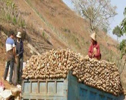 发现商机成立木薯加工厂还助当年农民脱贫致富