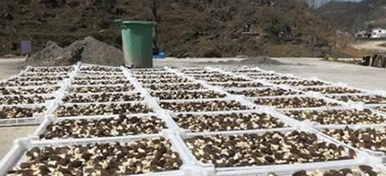 """<b>贵州德江小蘑菇种植加工""""群众脱贫致富有干劲</b>"""