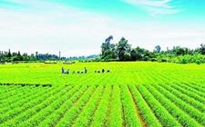 """嘉兴海宁农商行致力服务""""三农"""" 金融助力新型农业主体"""