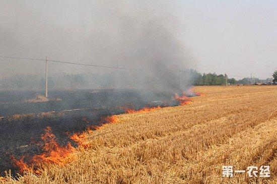 焚烧秸秆督察不利 吉林多位村镇级干部被警告处分