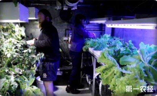 南极成功培植无土无光绿色蔬菜  德国科学家希望可以帮助到航天员