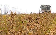巴西对华大豆出口量将增长 中美贸易摩擦给巴西创造了机遇