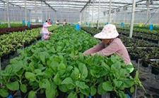 海南:为现代农业发展插上梦想的翅膀