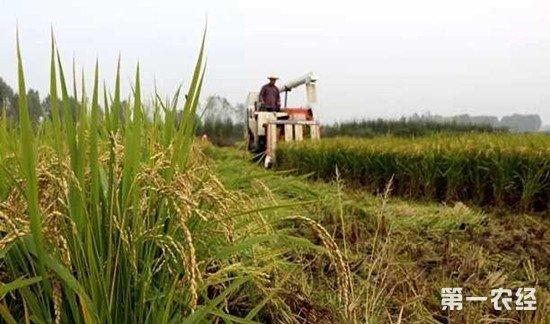 农村土地改革亮点:土地承包延长30年