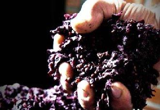 酿酒剩下的葡萄果渣再利用 做成食物防腐剂