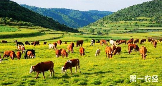 """与牛羊""""打交道""""20年 扎根藏乡破解畜牧难题"""