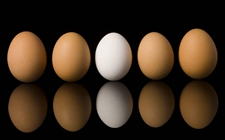 为什么鸡蛋颜色会不一样?有红皮、白皮、绿皮之分?
