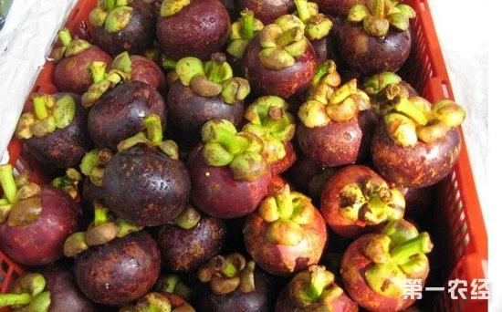 山西太原水果整体价格行情稳中有涨