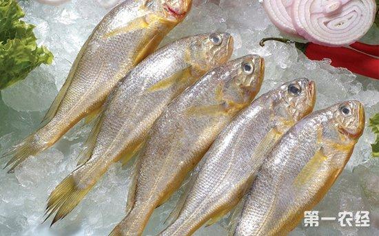 清明节后威海水产品市场价格开始高位回落