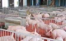 猪场冬季怎么把控空气质量和温度?猪场冬季空气质量和温度的把控方法
