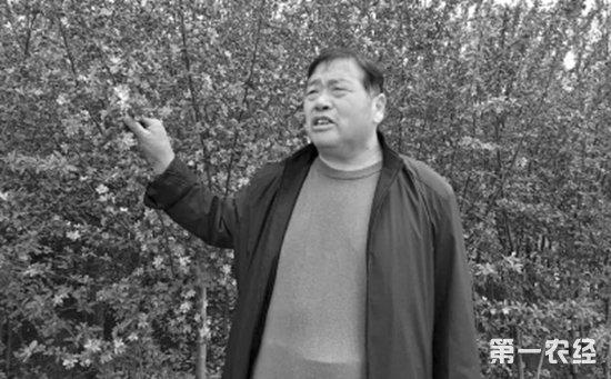担忧!河南濮阳老农二十多亩绿化树苗陷入滞销困境