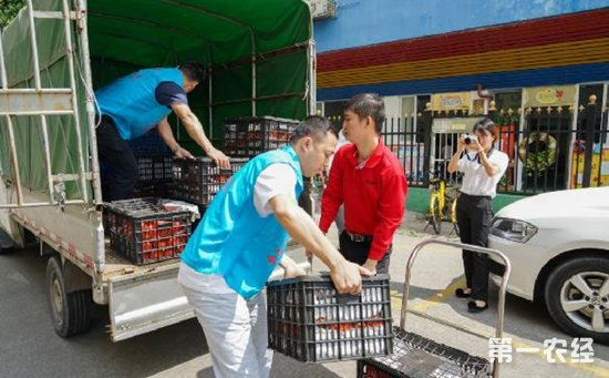 4000斤滞销西红柿传递爱心   怒江地区西红柿收购价回升