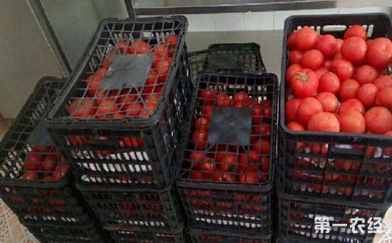 滞销西红柿