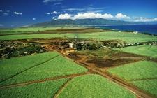 "<b>意大利生态农业快速发展 ""绿色农业旅游""管理企业1.15万家</b>"