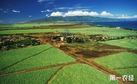 绿色农业农业观光