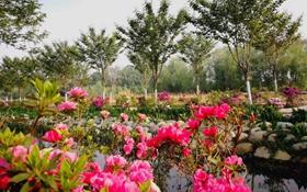 <b>第十五届中国杜鹃花展览会正式开幕 百余家国内外企业及协会参展</b>