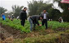 农业部专家指导:马铃薯防冻减灾工作措施