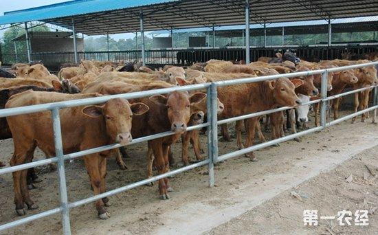 山东临沂计划三年建成现代畜牧业强市