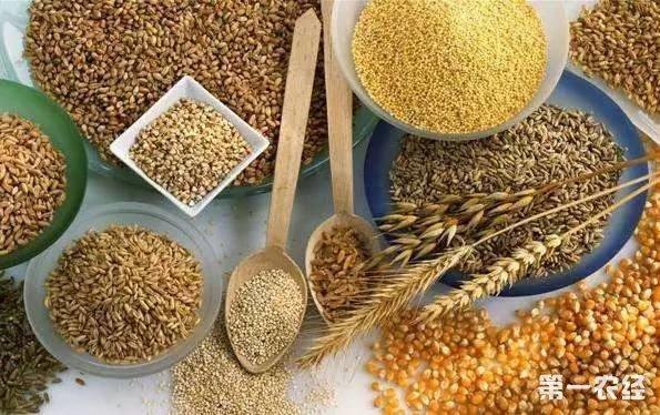 世界粮食价格指数小幅上升 小麦、玉米等粮食价格上涨
