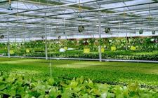 越南Vifarm公司首对新加坡出口绿色蔬菜高科技种植技术