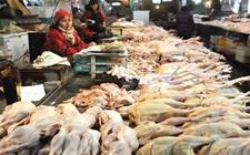 全国首例!肉鸡价格指数赔款在安徽宣城发放