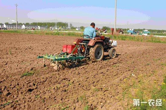 农业部专家指导:春播花生种植技术