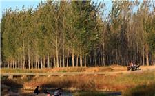 山东省规定:森林生态效益补偿补助标准为每亩15元