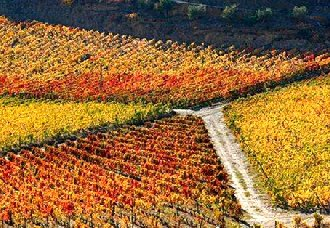 已经被列入世界遗产的葡萄酒产区有哪些?酒知识