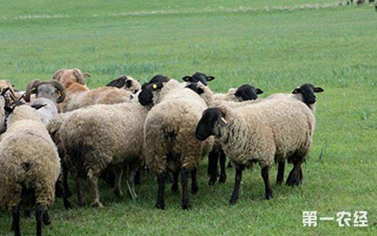 青海省启动特色畜牧业对口帮扶行动