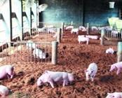 <b>南安对小流域内70家生猪养殖场安装140个监控随时掌握小流域环境</b>