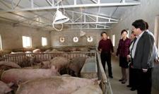 <b>西安工业大学真扶贫,扶真贫出资70余万元为贫困户建立养猪场</b>
