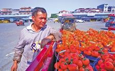 西红柿等农产品滞销根源是什么?部门应寻找销路做好应对措施