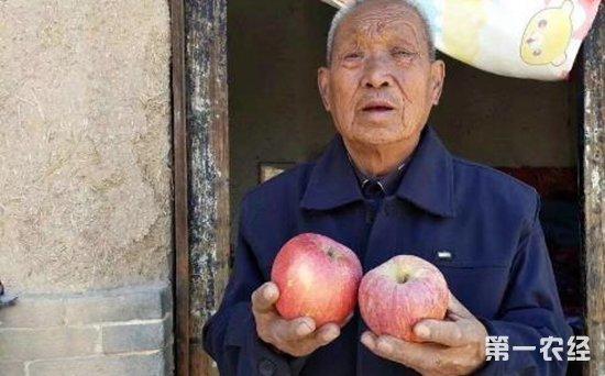 临猗4000万斤苹果滞销触目惊心  深圳电商企业义卖市民抢购20万箱