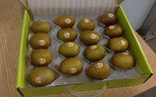 新西兰对华出口佳沛猕猴桃1550吨 为全球消费者的全年无间断供货
