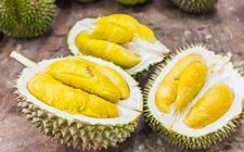 """马来西亚与中国检验认证集团合 推出""""溯源""""冷冻榴莲产品"""