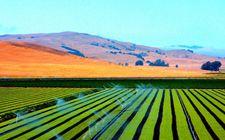 高达300亿美元!美国通过农产品信贷给农民供金融支持