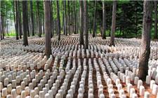积极发展林下经济 绿化致富两不误