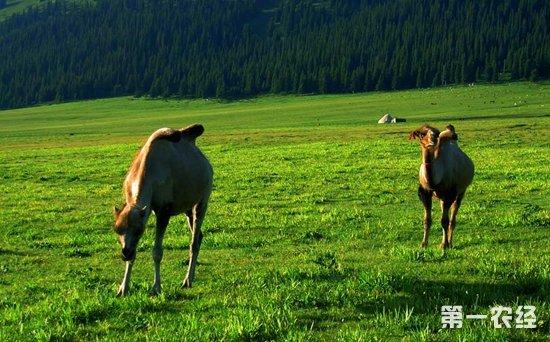 新疆博州2018年一季度畜牧业生产情况