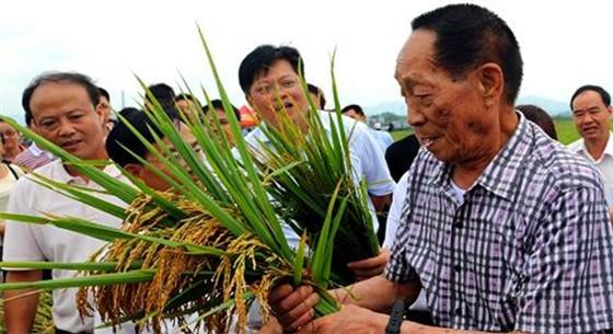 亩产1200公斤和海水稻 袁隆平退休前想完成这两件事