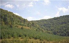 国家林业局规划:2035年实现一般用材基本自给