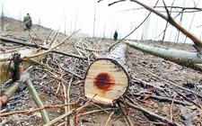 湖南省破获非法采伐国家重点保护植物案