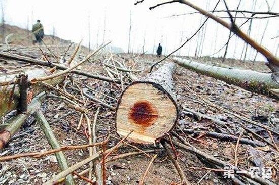 非法采伐国家重点保护植物